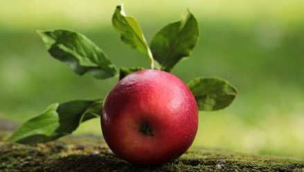 apple-2924531_1920