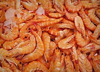 shrimp-1523135_1920